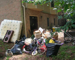 Conifer garbage removal and hauling